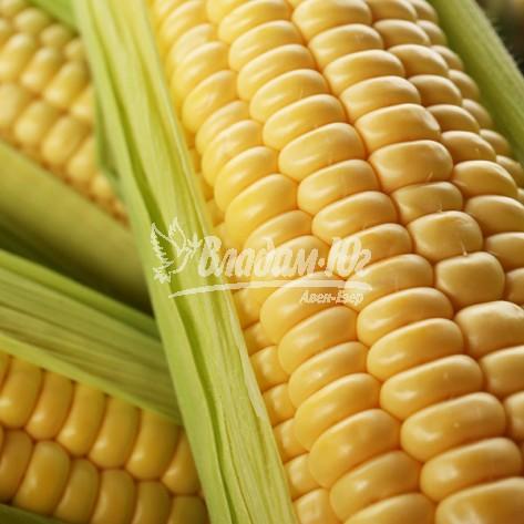 Купить семена кукурузы Леженд F1
