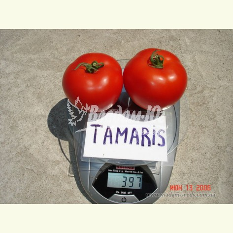 ТАМАРИС F1