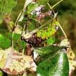 Фитопатологический анализ растения
