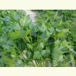 Семена НОВАС  оптом