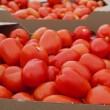Купить семена Дино F1