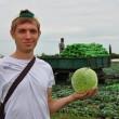 Купить семена ГОДВАРИ F1