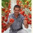 Семена САРРА F1 оптом