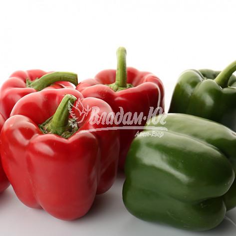 Купити насіння ГЕРКУЛЕС F1