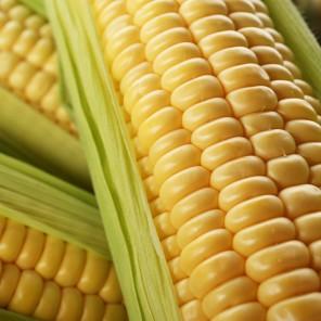 Насіння кукурудзи Леженд F1