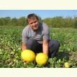 Купити насіння БАБОР F1