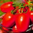 Купити насіння ЛІОНА F1