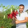 Купити насіння РЕДКАН F1