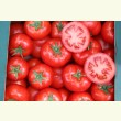 Купити насіння ОАЗІС F1
