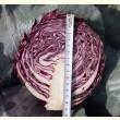 Купити насіння РЕДСКАЙ F1