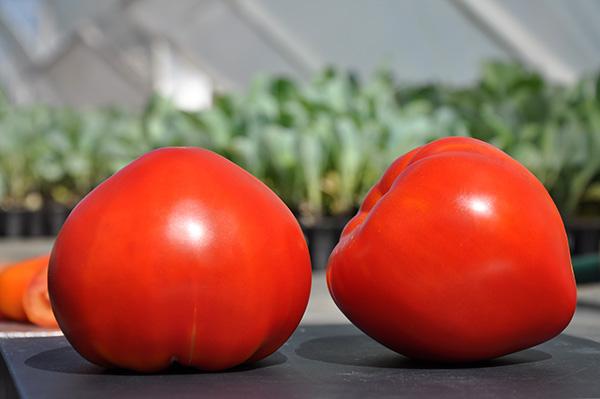 dva_tomata